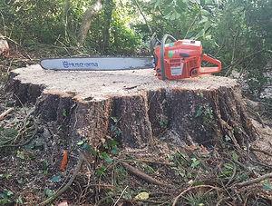 redwood sed 7.jpg