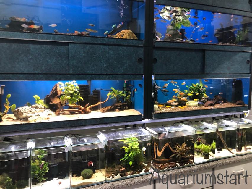Interieur zoetwater aquaristic Venlo