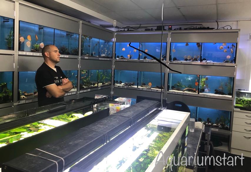 Interieur van zoetwater aquaristic Venlo
