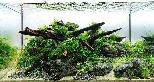 Op deze afbeelding zie je een aquarium ingericht volgens de Nature stijl
