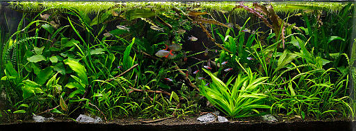Op deze afbeelding zie je een aquarium ingericht in de jungle stijl