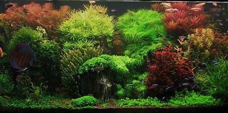 Een aquarium opstarten.