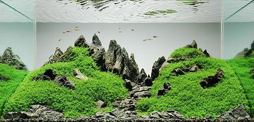Op deze afbeelding zie je een aquascape met gebergtes.