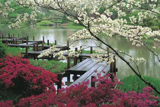 jardin japonisant 2.jpg