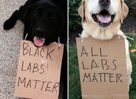 Is my dog racist?