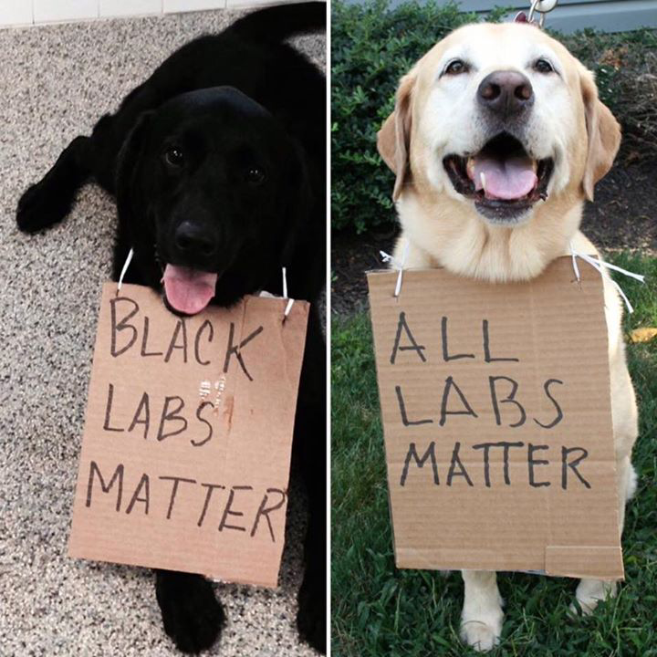 Is my dog racist? | Dog Training Blog | Pensacola FL