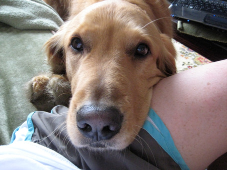 3 ways your dog asks you for help.