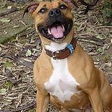 Pensacola FL | client testimonial | Happy Hound Dog Training