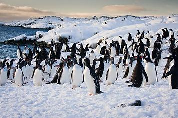 shutterstock_86102701_Antarctica.jpg