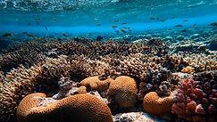 Red Sea3.jpg