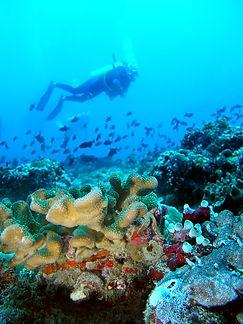 shutterstock_17664100_Addu_Atoll.jpg