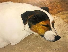 sleepingdog.jpeg