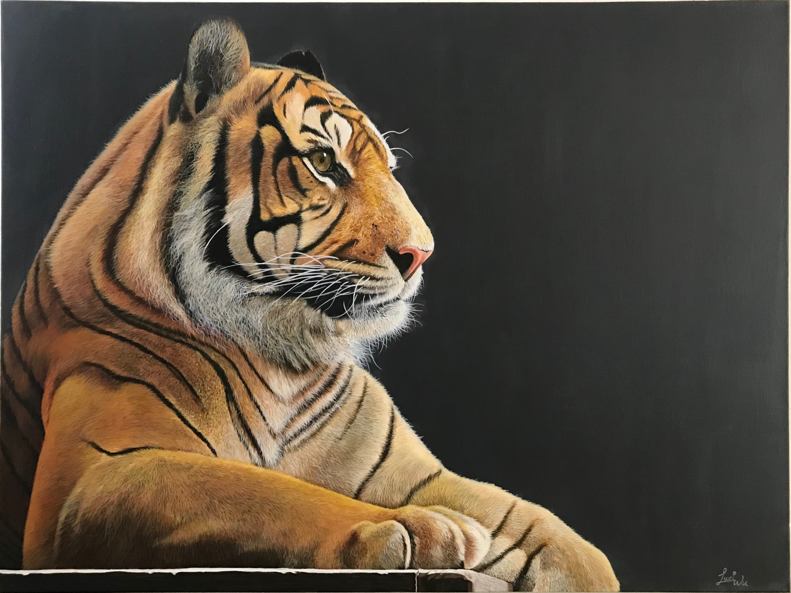 "Tiger 30"" x 40"" Acrylic - Available"