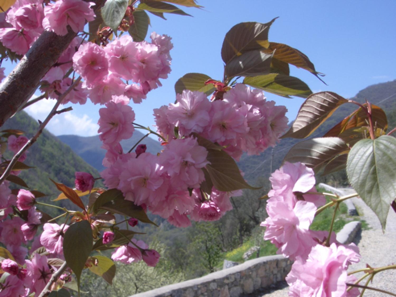 2006-04-20 043.jpg