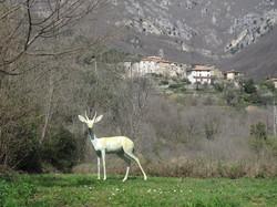 Colletta sculpture: 'The Gazelle'