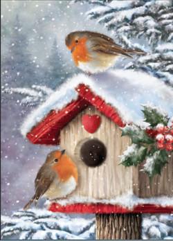 Robin-on-bird-box-1