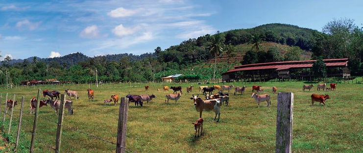 Beautiful Malaysian Farm