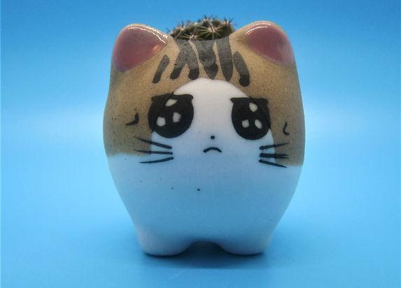 AngryCat3.jpg