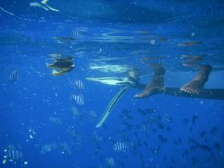Fiji Scuba Diving Hammerhead Scare, Nadi, Fiji!