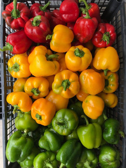 Bell Peppers                                              l