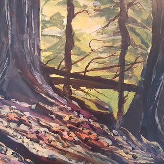 Morning Light – Algonquin Park