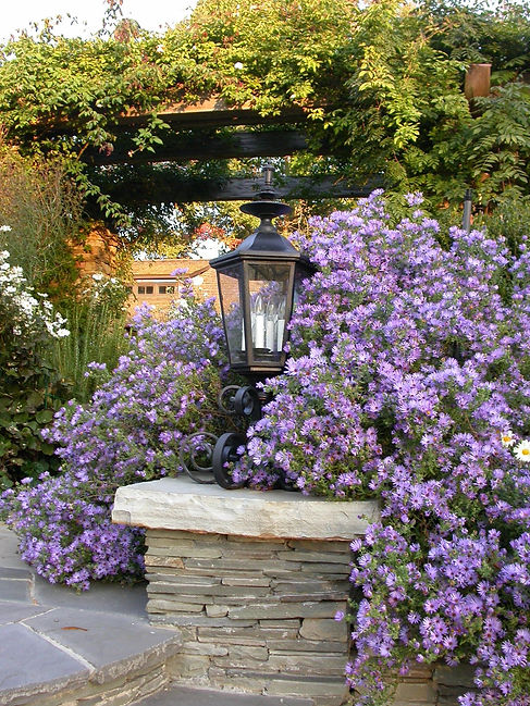 Custom Light Fixture and Aster Oblongifolius 'Racheal Jackson'