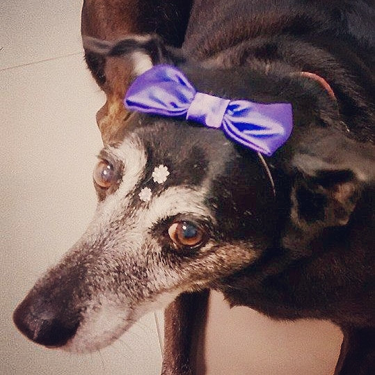 Banho Canino Butanta.jpg