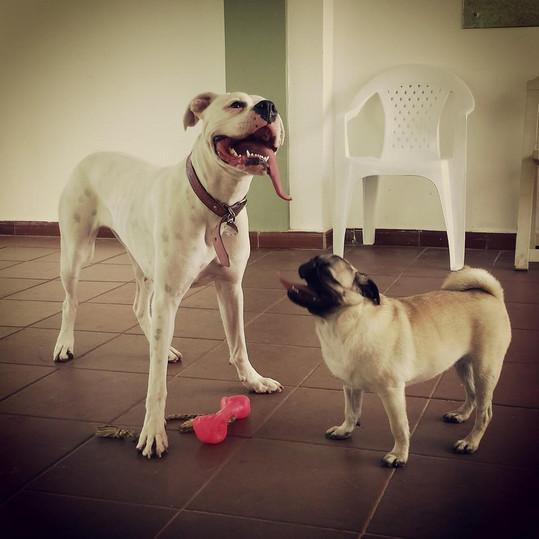 Creche Canina SP.jpg