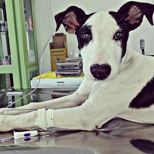 Tratamento Cacnino Butanta SP.jpg