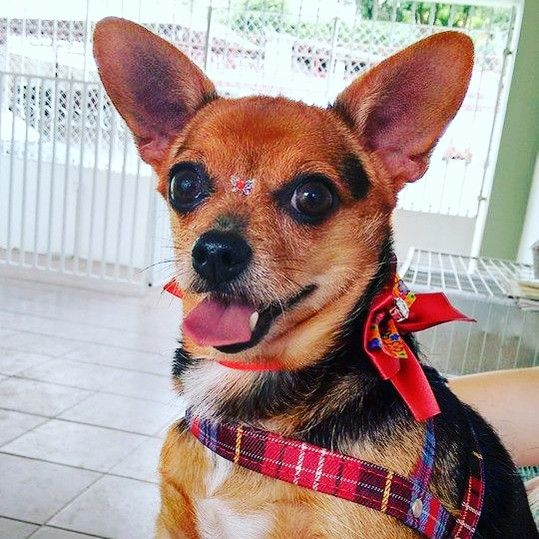 Banho Pet Dog.jpg