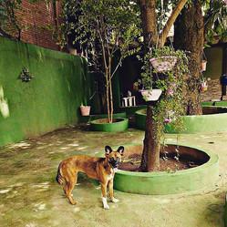 Hotel Creche Cachorro Verde SP.jpg