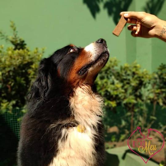 Hotel Creche Cachorro Gigante Pet.jpg