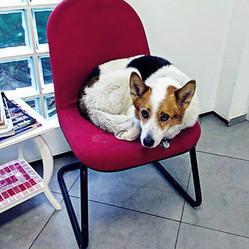 Canina Clinica Veterinaria Butanta.jpg