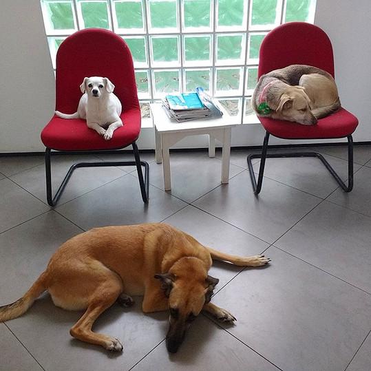 Clinica Cachorros Vacinas SP.jpg