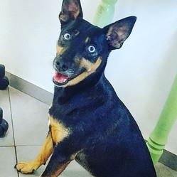 Creche Canina SP Butanta.jpg