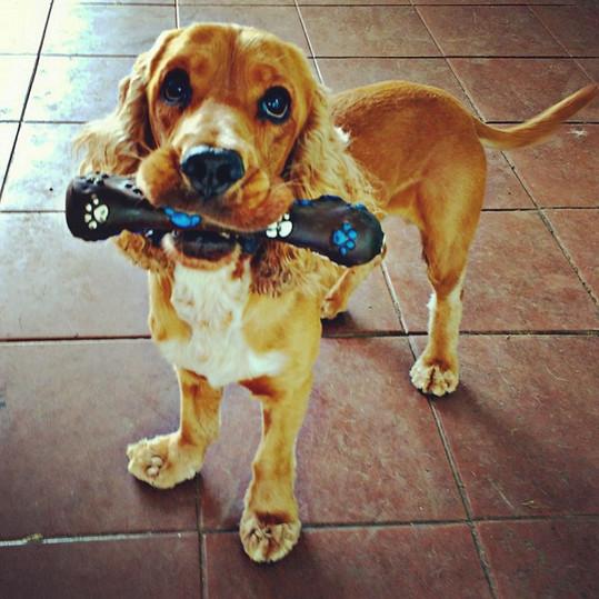 Creche Hotel Pet Cachorro.jpg