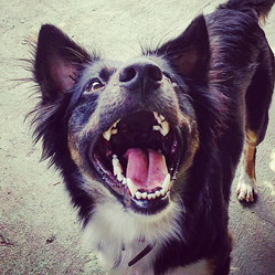Creche Pet Sorriso.jpg