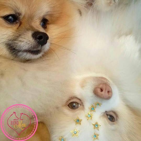 Banho Tosa Pet Lulu.jpg