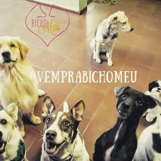 Creche Butanta Canina.jpg