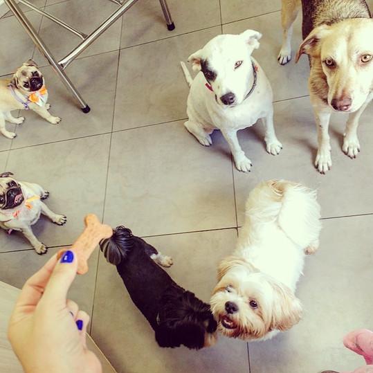 Amigos Pet Hotel Canino.jpg