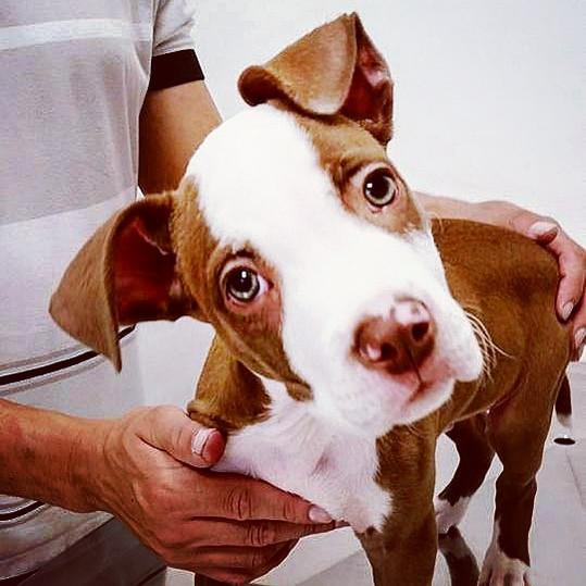Veterinaria Butanta Cachorro.jpg