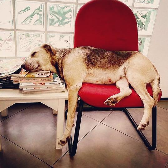 Veterinaria Cachorro.jpg