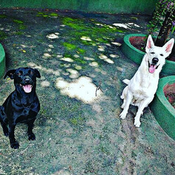 Cachorros Creche Hotel.jpg