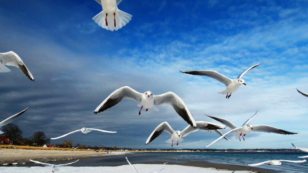 Approaching seagulls