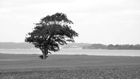 Fyn Fønsskov