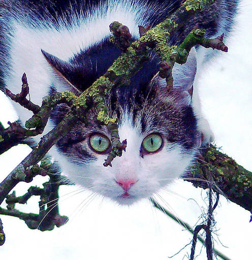 Snow Cat (Enlarged Detail)