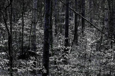 Mierzeja Wiślana Park Krajobrazowy
