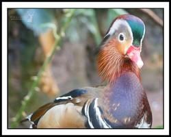 AnimalPhotography2_edited_edited.jpg