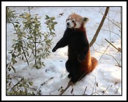 AnimalPhotography3.jpg