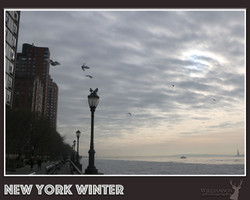 NYCPhotography1.jpg